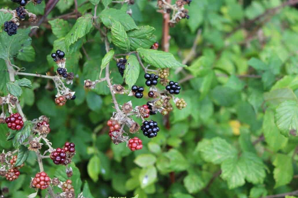 Foraging and bushcraft in the UK - only eat what you know is safe.