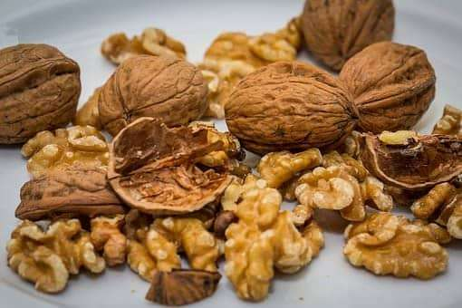 edible autumn nuts