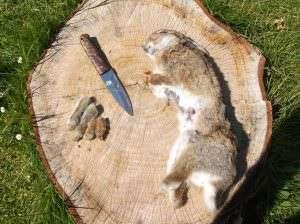 rabbit skinning
