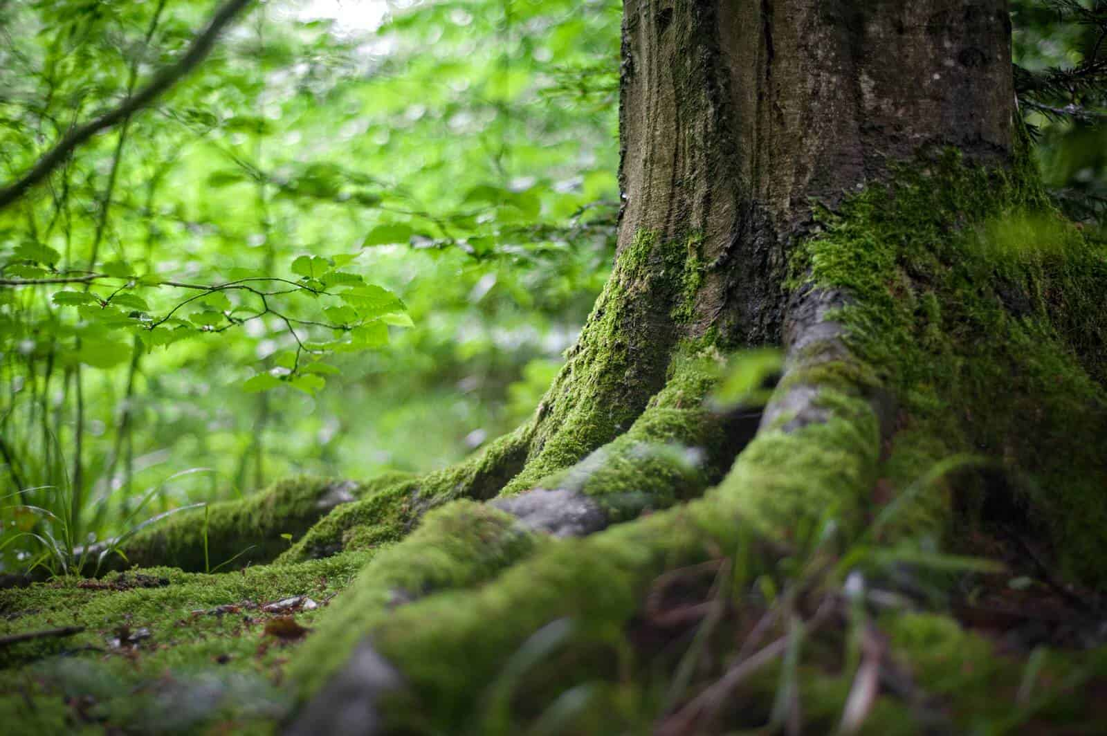 Discover why nature is good for you