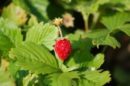 Edible plants UK